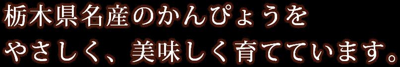 栃木県名産のかんぴょうをやさしく、美味しく育てています。